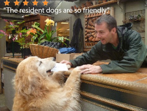 """Photo of a man at a business counter handing a paper to a golden retriever. A five-star review is overlaid reading """"The resident dogs are so friendly"""""""