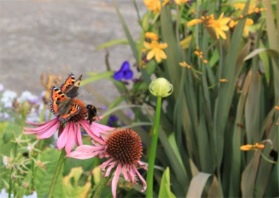 Photo of butterflies and a bee landing on a flower.