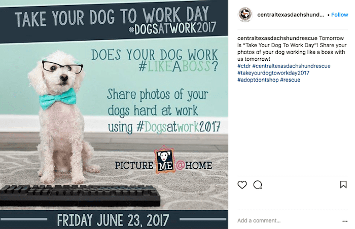 june marketing ideas bring your dog to work day contest
