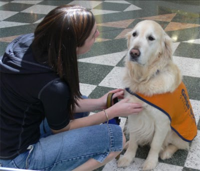 Photo of a woman sitting with a guide dog.